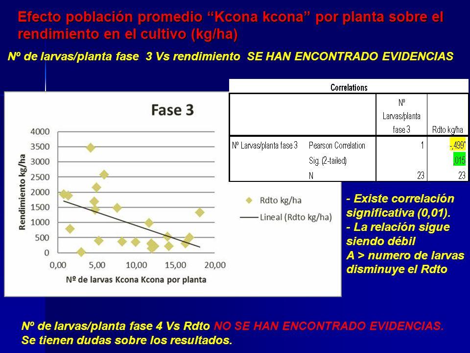 Efecto población promedio Kcona kcona por planta sobre el rendimiento en el cultivo (kg/ha)
