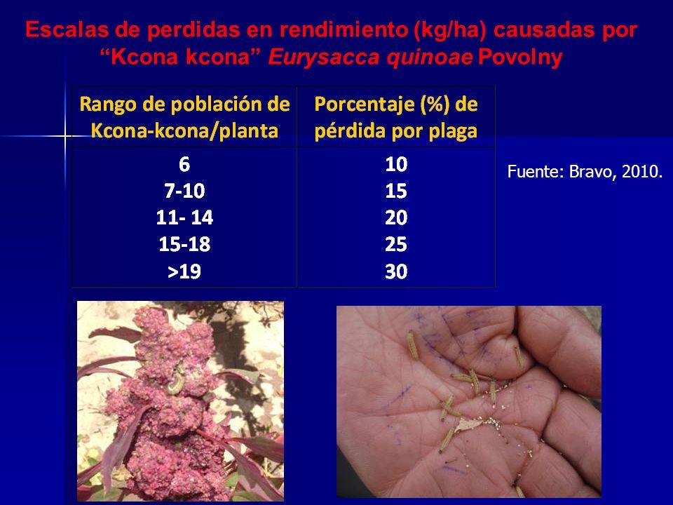 Escalas de perdidas en rendimiento (kg/ha) causadas por Kcona kcona Eurysacca quinoae Povolny