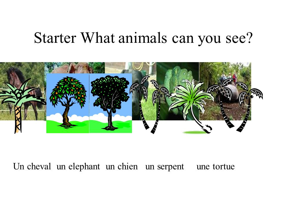 Starter What animals can you see