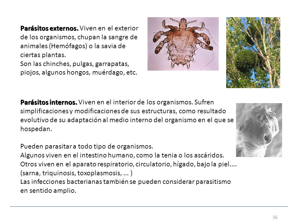 Organizaci n y diversidad de la biosfera ppt descargar for Medio en el que habitan los arboles