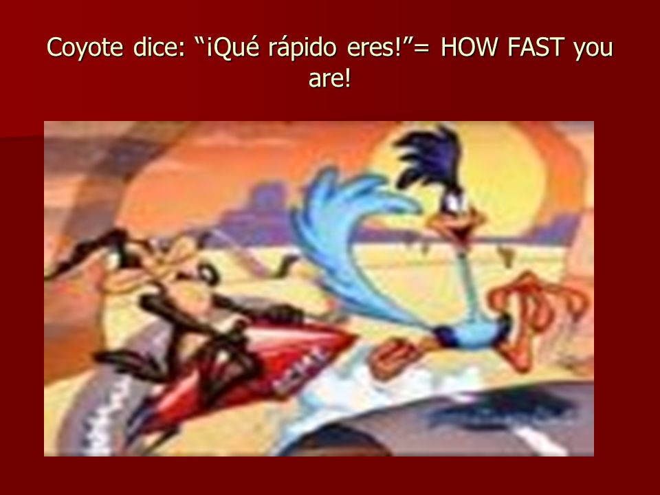 Coyote dice: ¡Qué rápido eres! = HOW FAST you are!