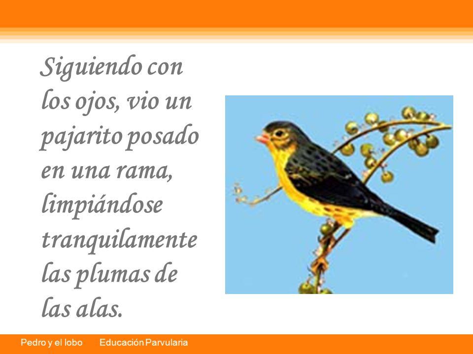 Siguiendo con los ojos, vio un pajarito posado en una rama, limpiándose tranquilamente las plumas de las alas.