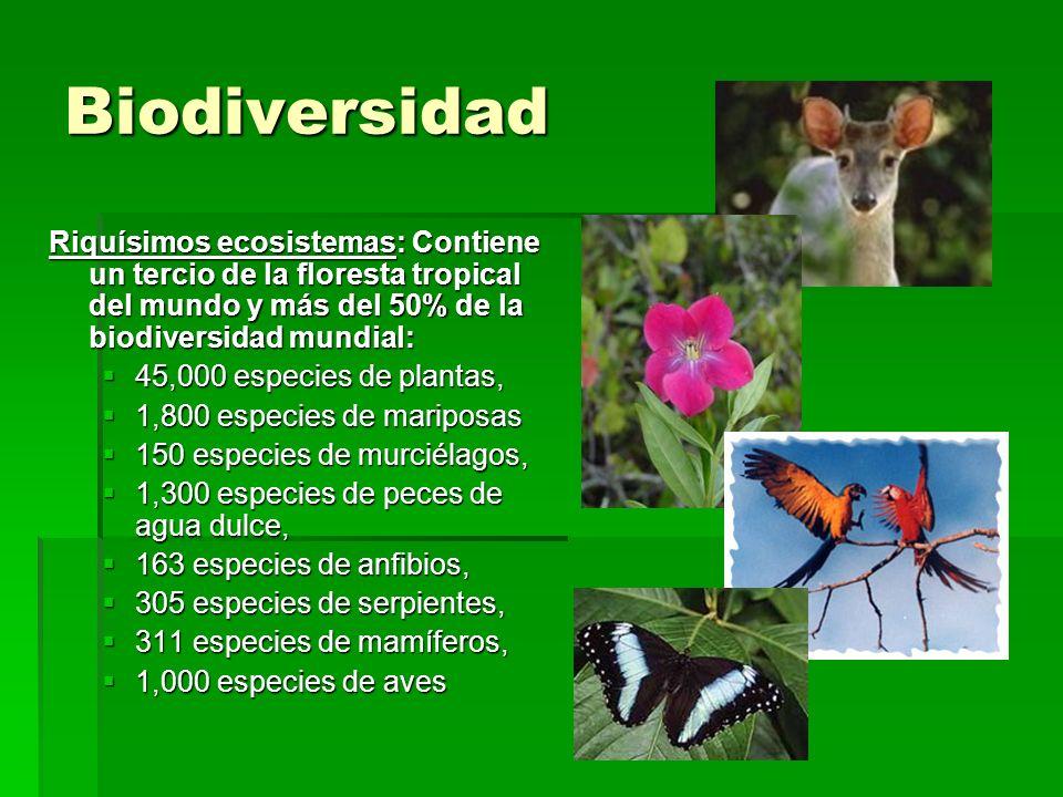 Biodiversidad Riquísimos ecosistemas: Contiene un tercio de la floresta tropical del mundo y más del 50% de la biodiversidad mundial: