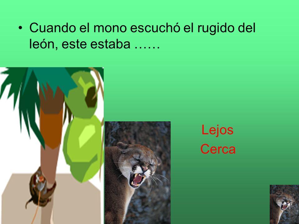 Cuando el mono escuchó el rugido del león, este estaba ……