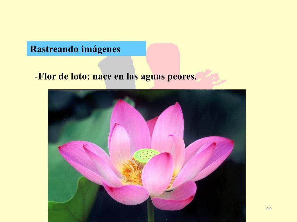 Rastreando imágenes Flor de loto: nace en las aguas peores.