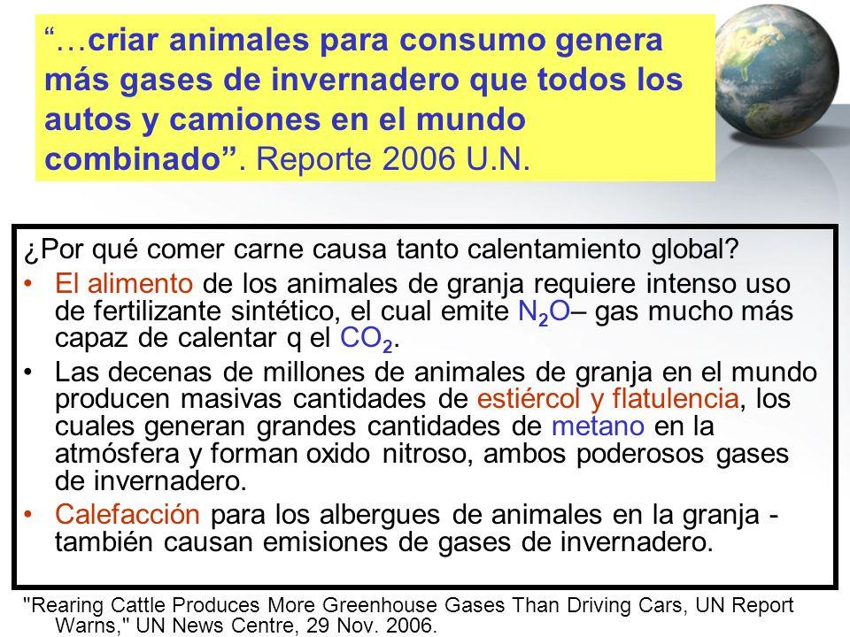 …criar animales para consumo genera más gases de invernadero que todos los autos y camiones en el mundo combinado . Reporte 2006 U.N.