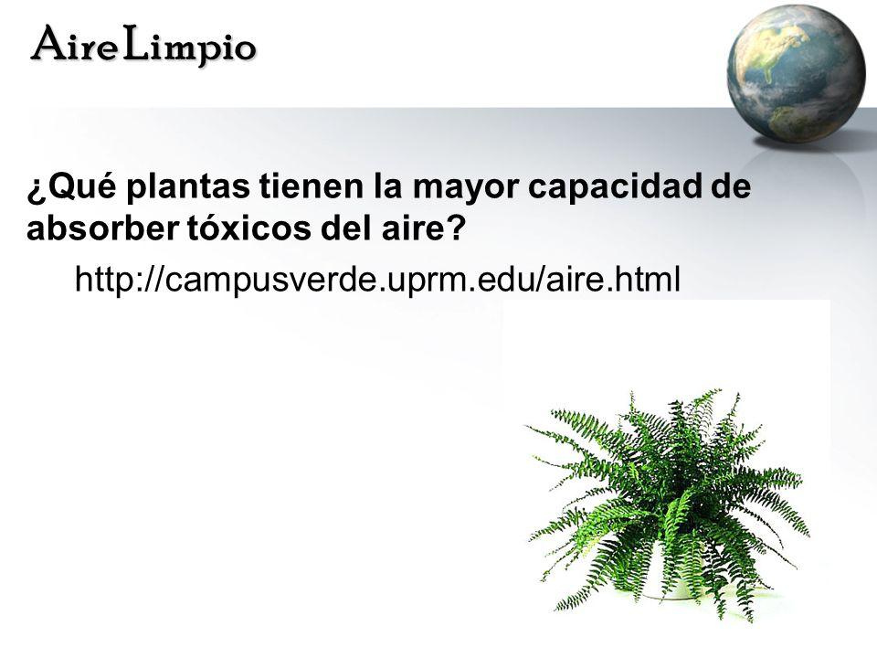 Aire Limpio ¿Qué plantas tienen la mayor capacidad de absorber tóxicos del aire.