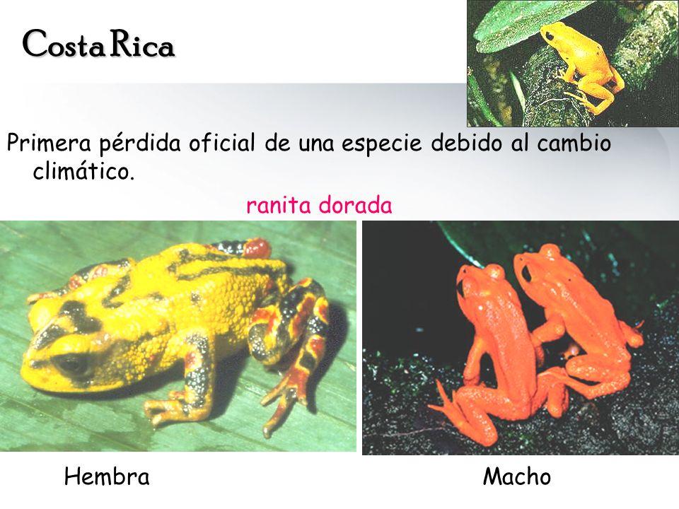 Costa Rica Primera pérdida oficial de una especie debido al cambio climático.