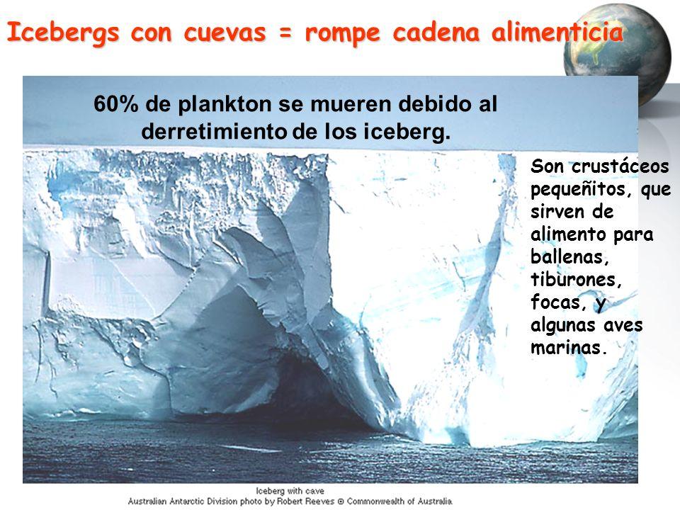 Icebergs con cuevas = rompe cadena alimenticia