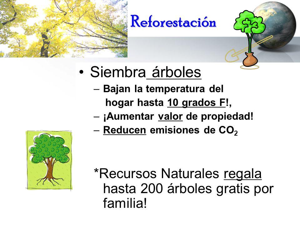 Reforestación Siembra árboles