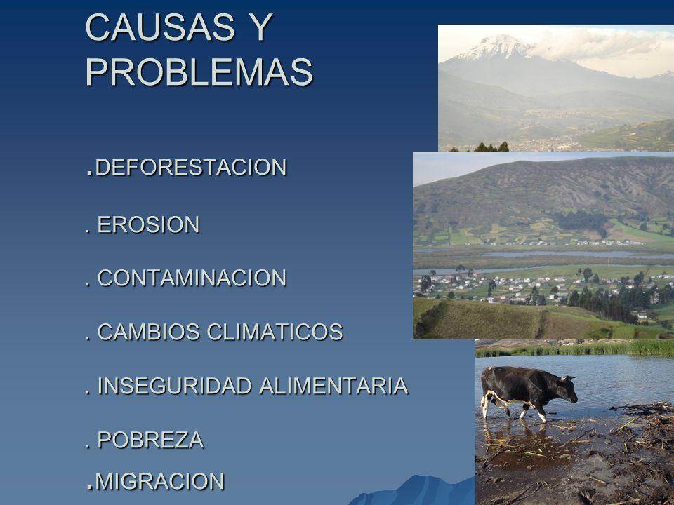 CAUSAS Y PROBLEMAS. DEFORESTACION. EROSION. CONTAMINACION