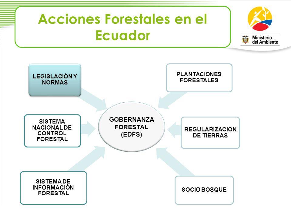 Acciones Forestales en el Ecuador