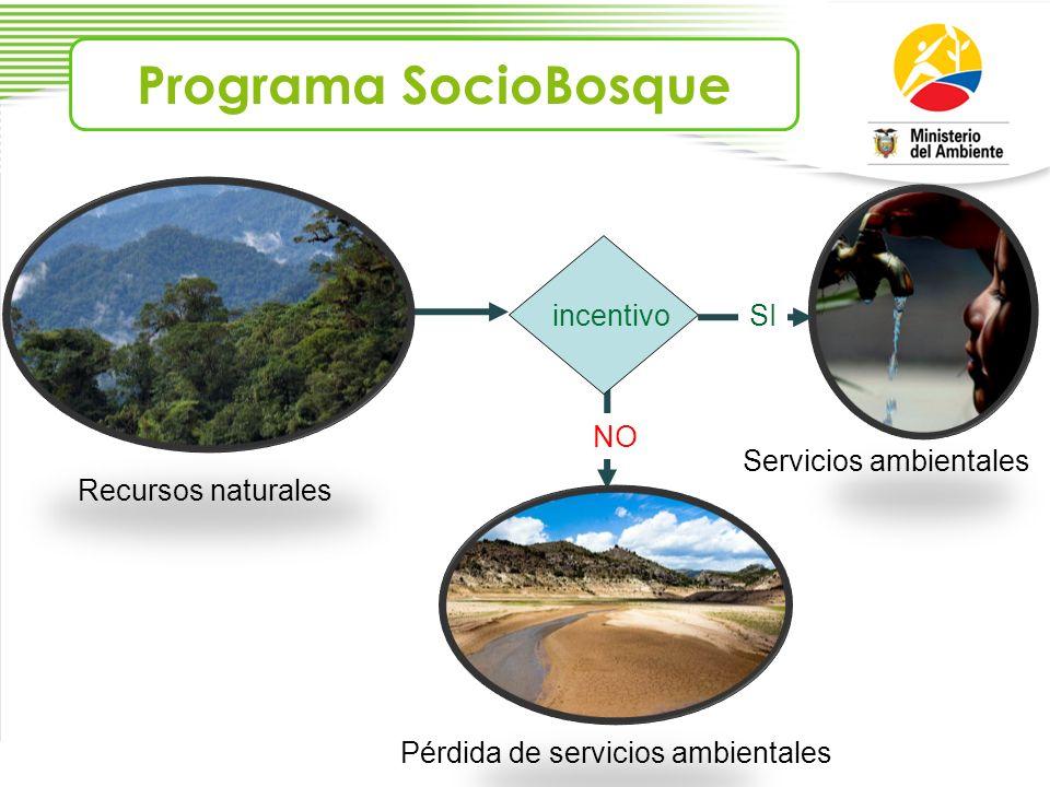 Programa SocioBosque incentivo SI NO Servicios ambientales