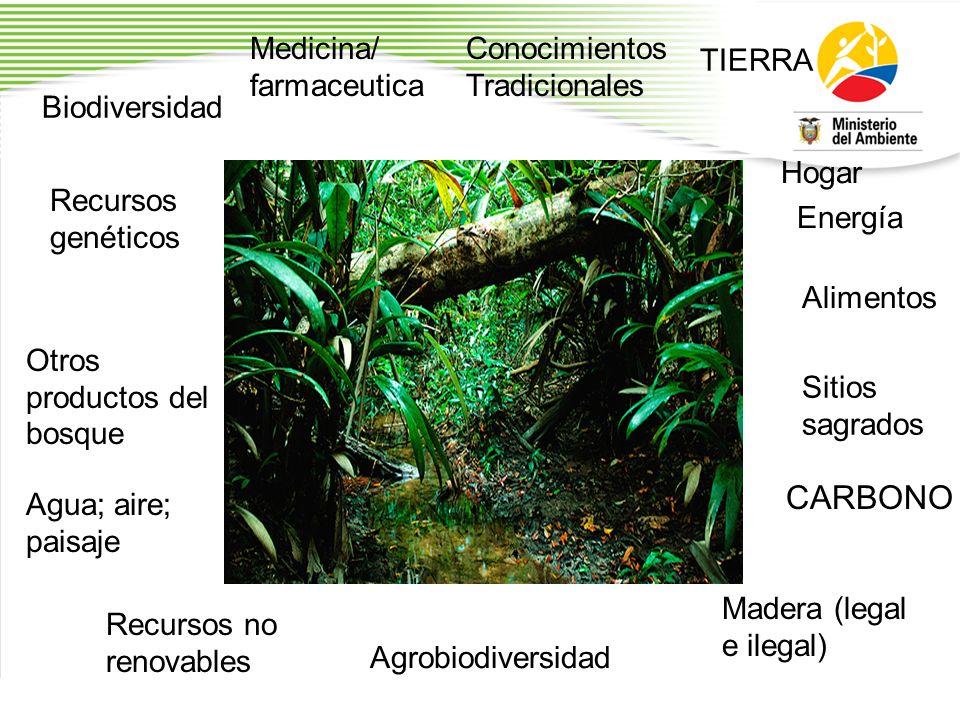 CARBONO Medicina/ farmaceutica ConocimientosTradicionales TIERRA
