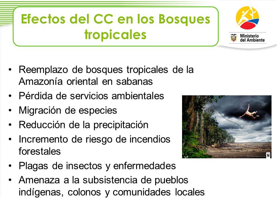Efectos del CC en los Bosques tropicales