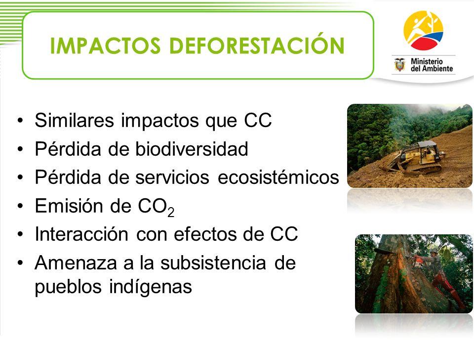 IMPACTOS DEFORESTACIÓN
