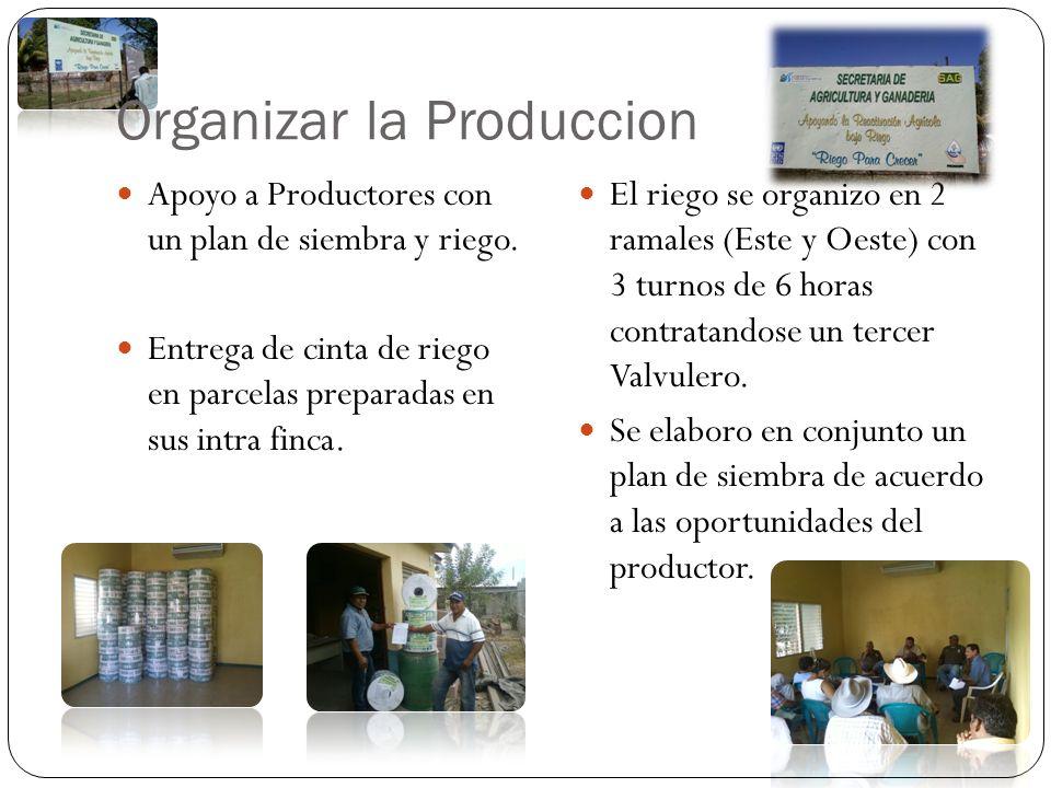 Organizar la Produccion
