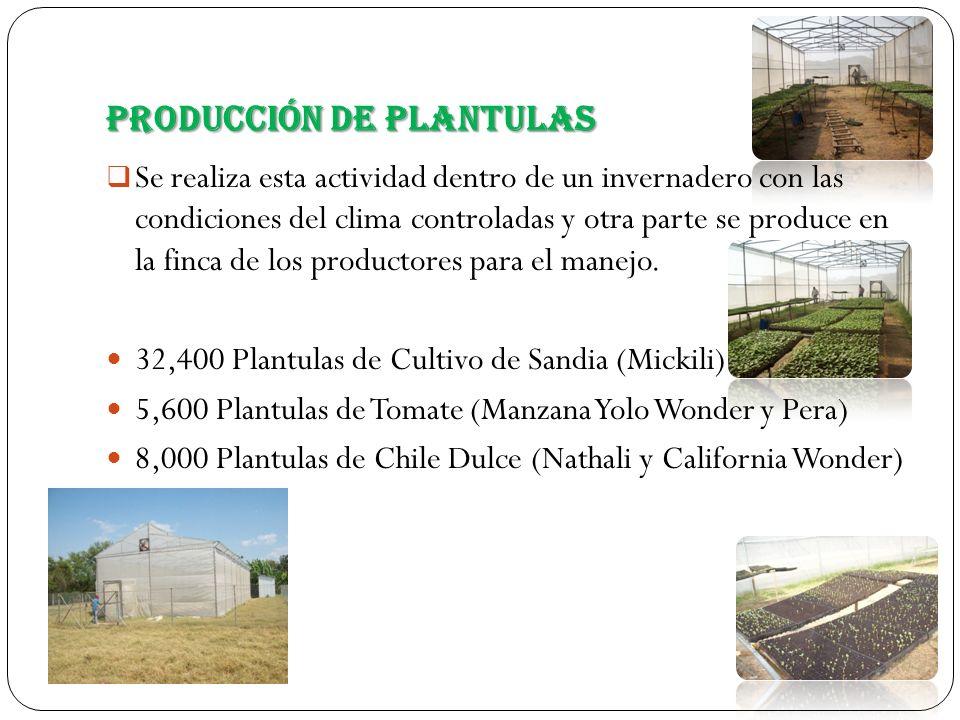 Producción de Plantulas