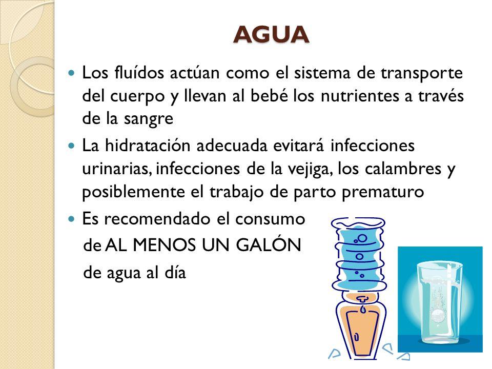 AGUA Los fluídos actúan como el sistema de transporte del cuerpo y llevan al bebé los nutrientes a través de la sangre.