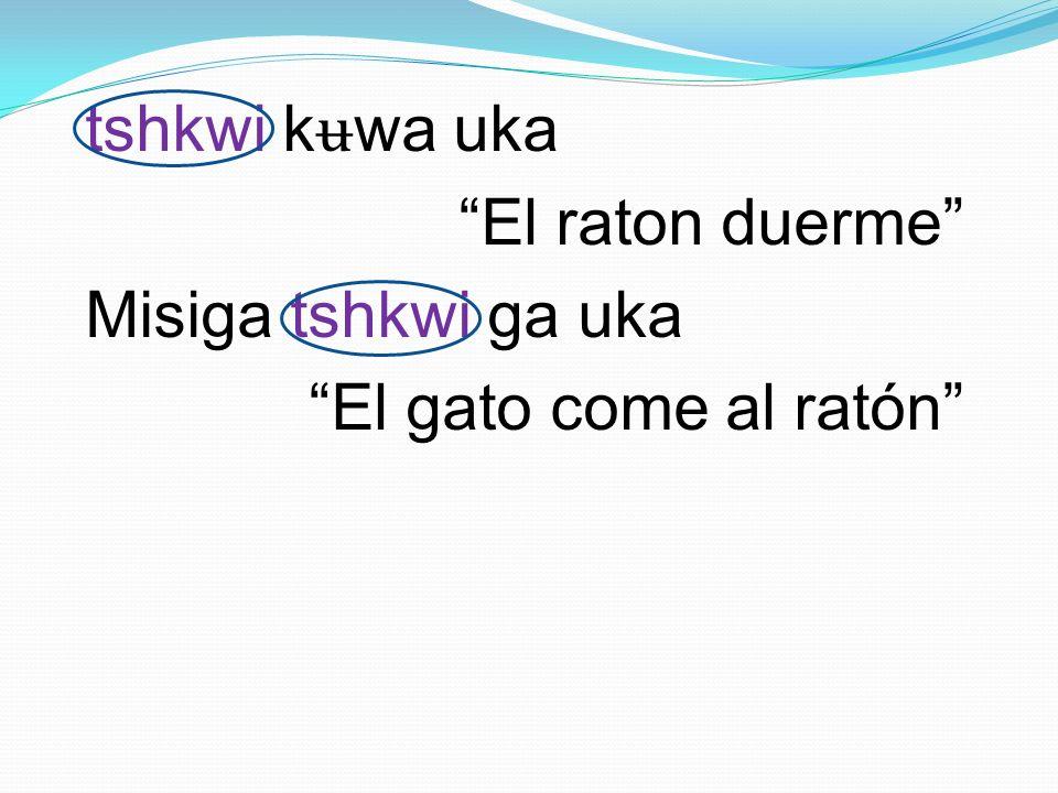 tshkwi kʉwa uka El raton duerme Misiga tshkwi ga uka El gato come al ratón