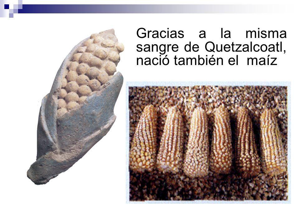 Gracias a la misma sangre de Quetzalcoatl, nació también el maíz