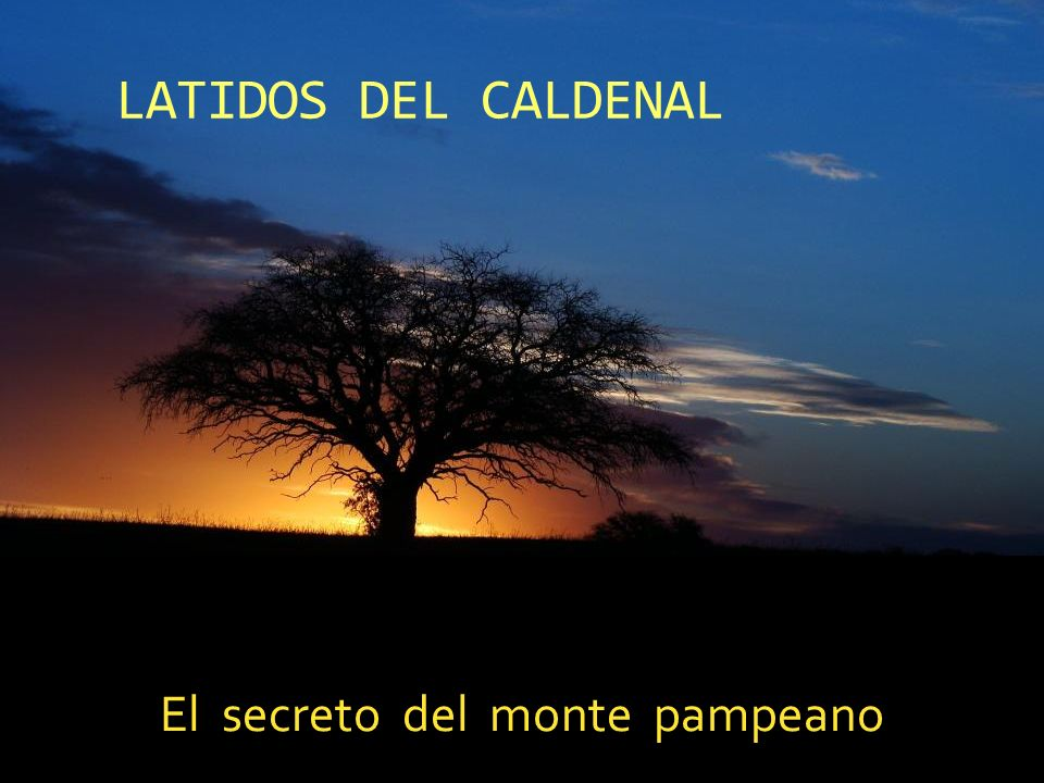 El secreto del monte pampeano