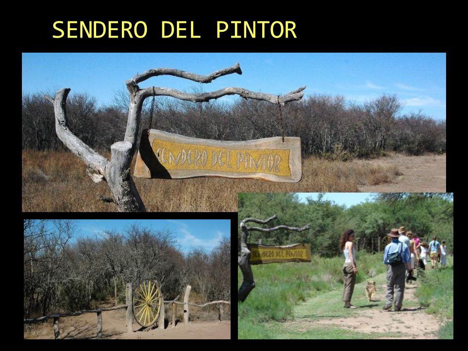 SENDERO DEL PINTOR