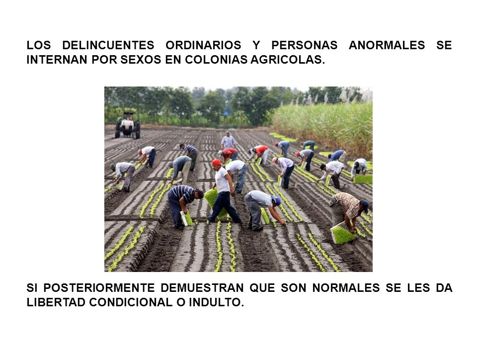 LOS DELINCUENTES ORDINARIOS Y PERSONAS ANORMALES SE INTERNAN POR SEXOS EN COLONIAS AGRICOLAS.