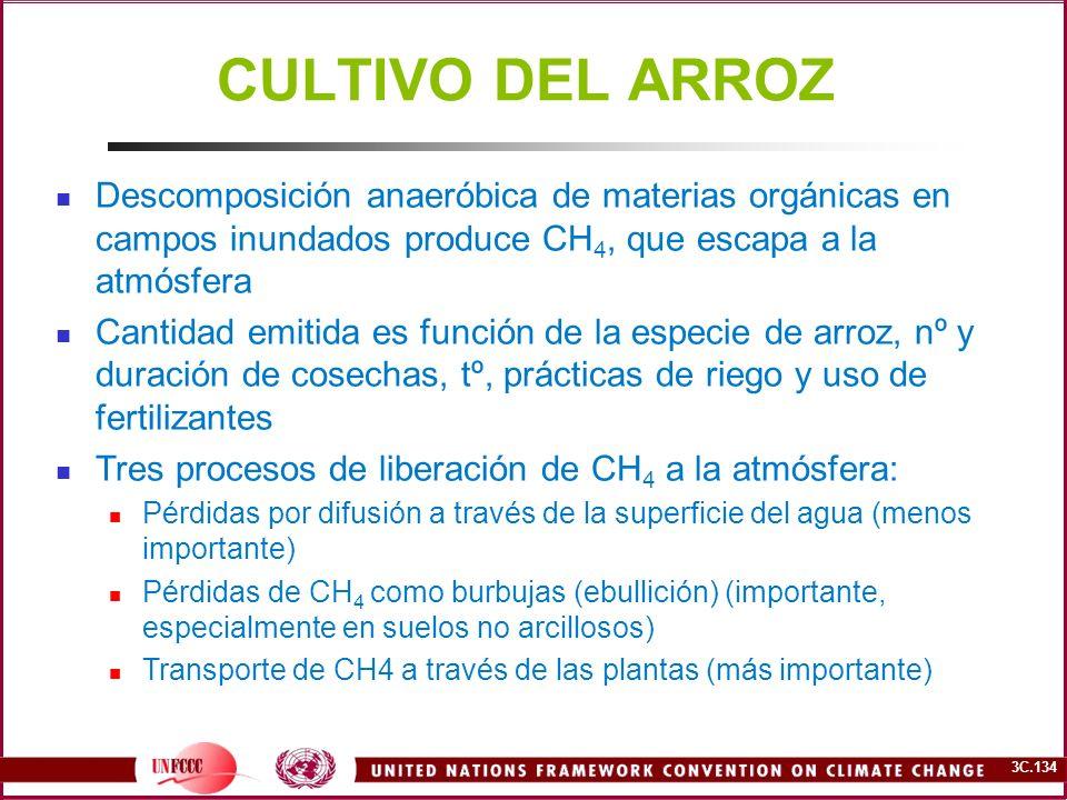 CULTIVO DEL ARROZ Descomposición anaeróbica de materias orgánicas en campos inundados produce CH4, que escapa a la atmósfera.