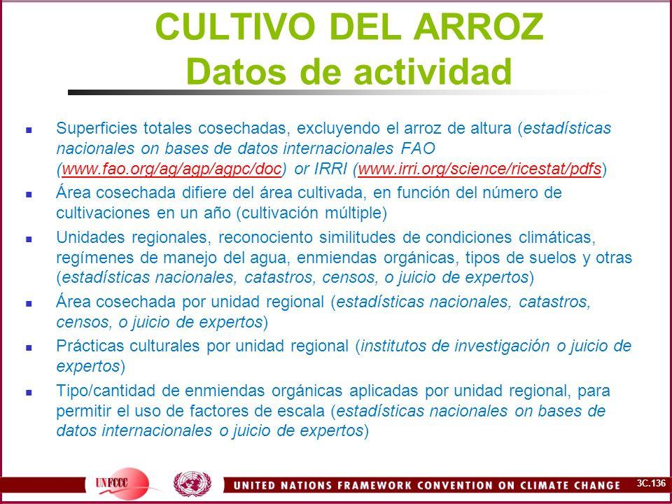 CULTIVO DEL ARROZ Datos de actividad