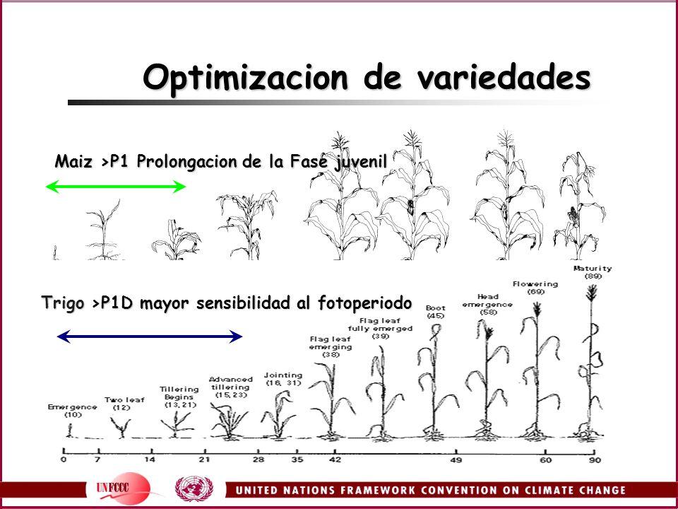 Optimizacion de variedades