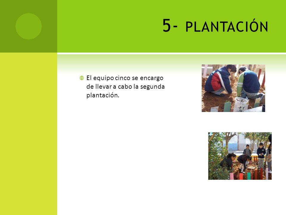 5- plantación El equipo cinco se encargo de llevar a cabo la segunda plantación.