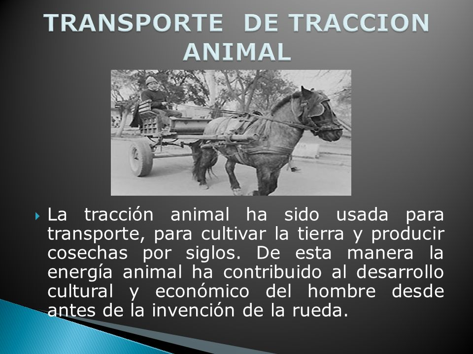TRANSPORTE DE TRACCION ANIMAL