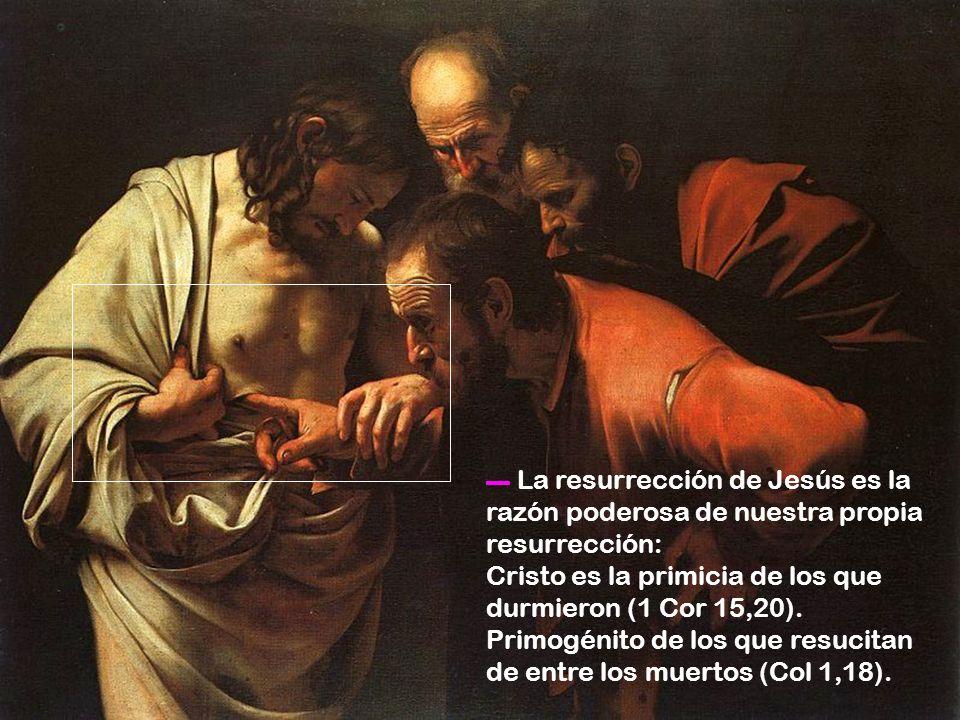Cristo es la primicia de los que durmieron (1 Cor 15,20).