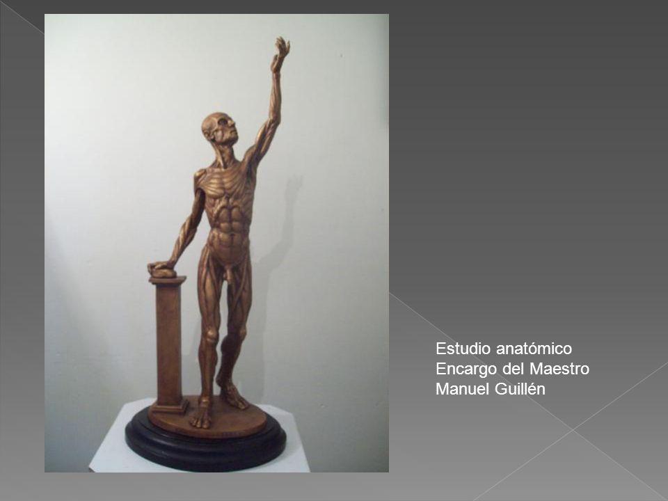Estudio anatómico Encargo del Maestro Manuel Guillén