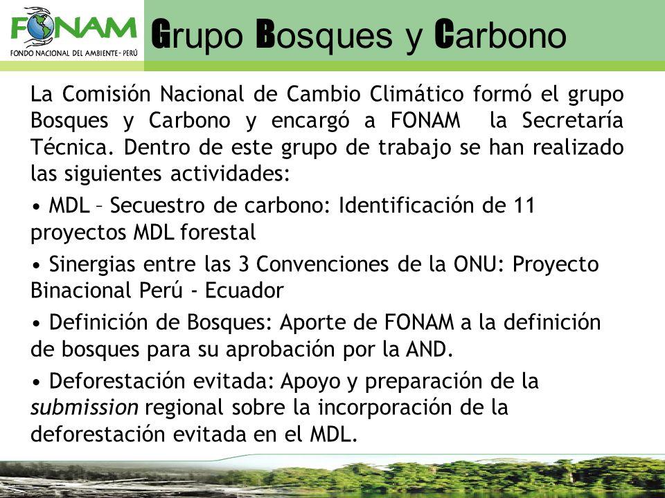 Grupo Bosques y Carbono