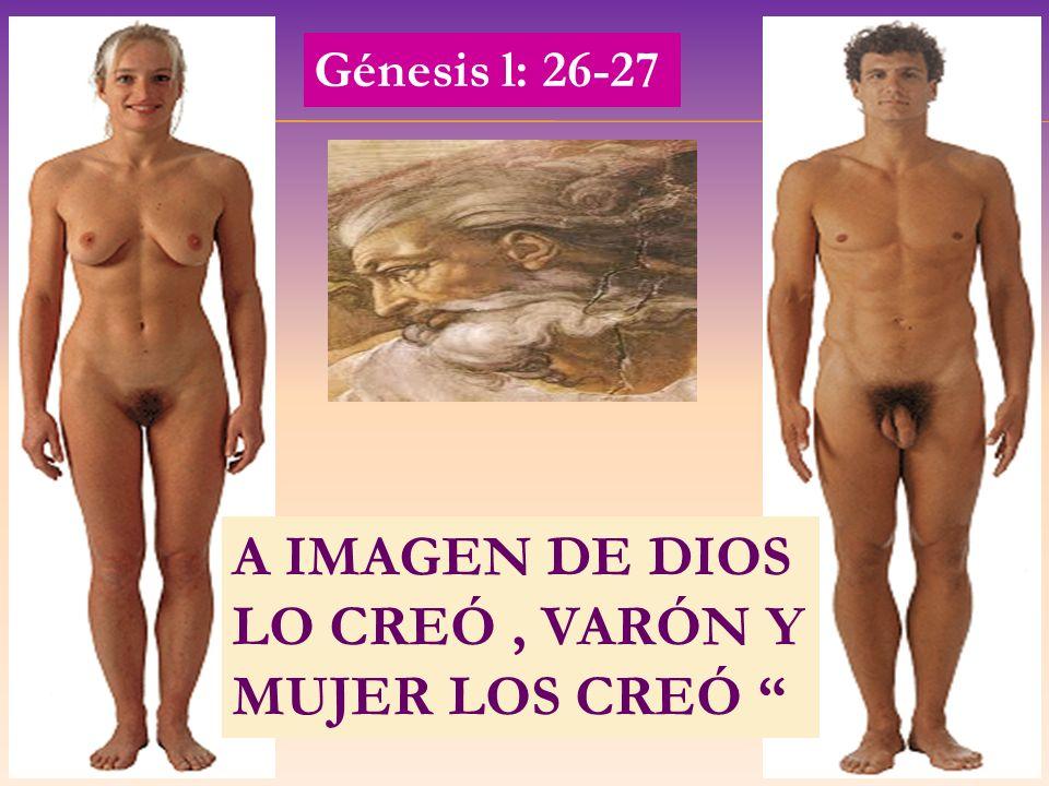 A IMAGEN DE DIOS LO CREÓ , VARÓN Y MUJER LOS CREÓ