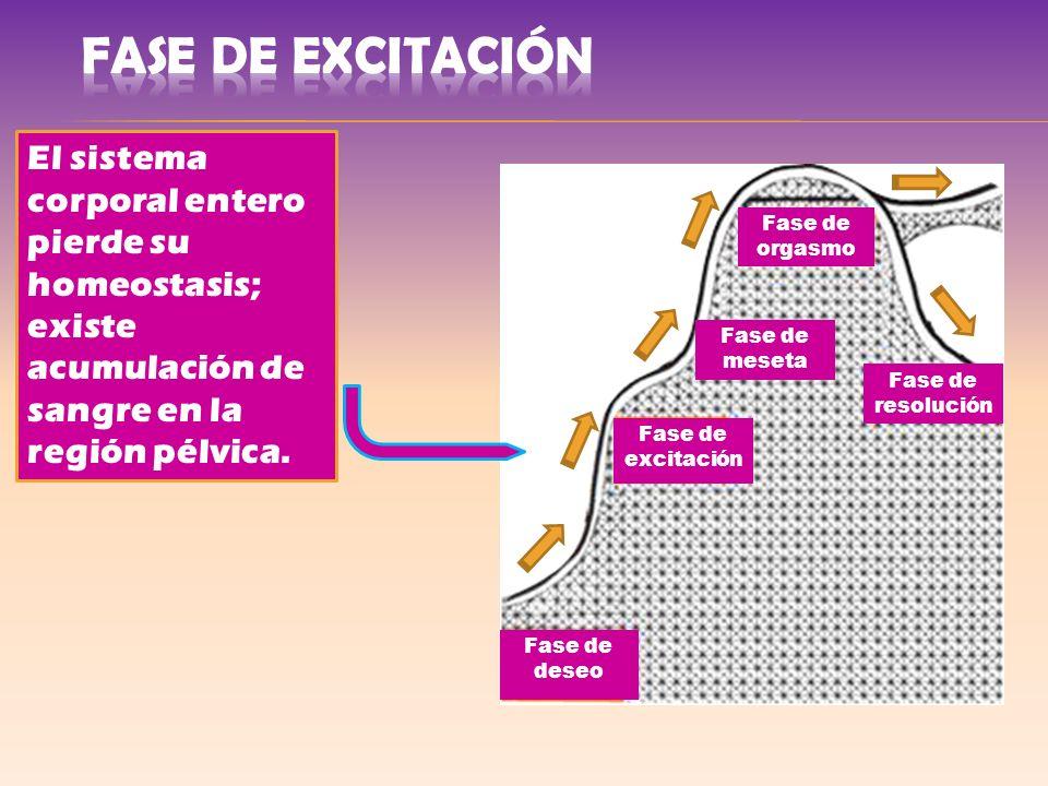 FASE DE Excitación El sistema corporal entero pierde su homeostasis; existe acumulación de sangre en la región pélvica.