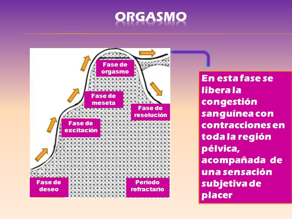 ORGASMO Fase de excitación. Fase de meseta. Fase de resolución. Fase de orgasmo. Fase de deseo.
