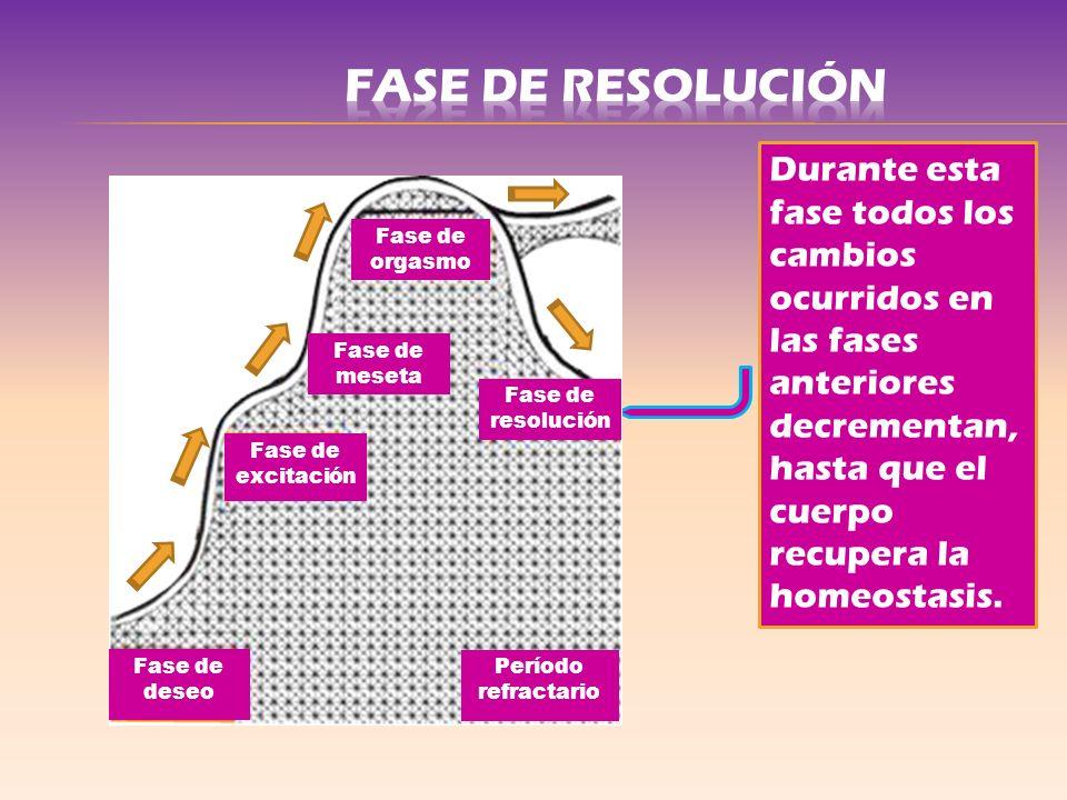 FASE DE RESOLUCIÓN Durante esta fase todos los cambios ocurridos en las fases anteriores decrementan, hasta que el cuerpo recupera la homeostasis.
