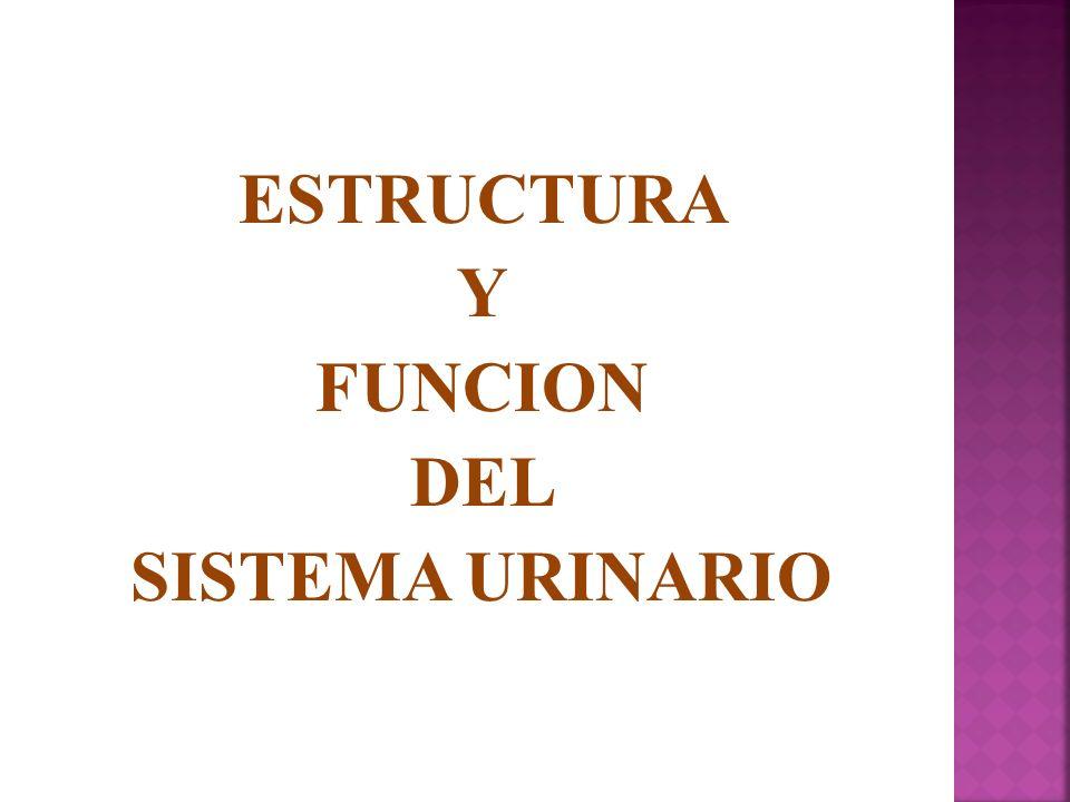 ESTRUCTURA Y FUNCION DEL SISTEMA URINARIO