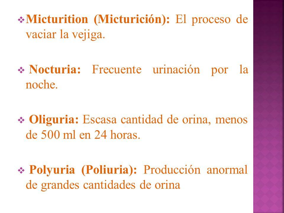 Micturition (Micturición): El proceso de vaciar la vejiga.