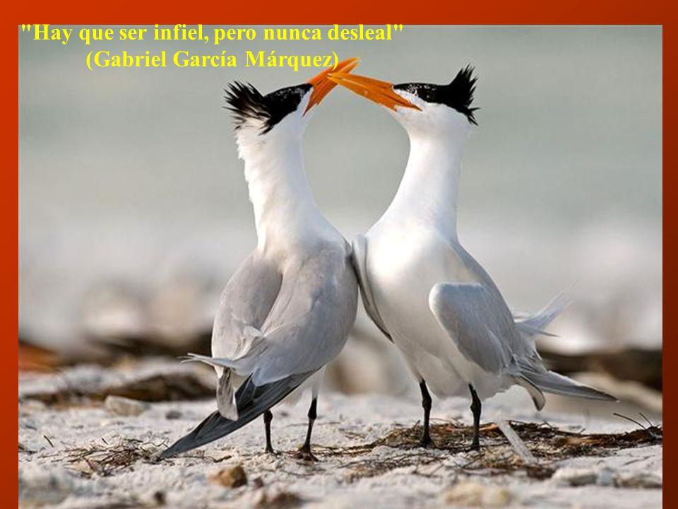 Hay que ser infiel, pero nunca desleal (Gabriel García Márquez)