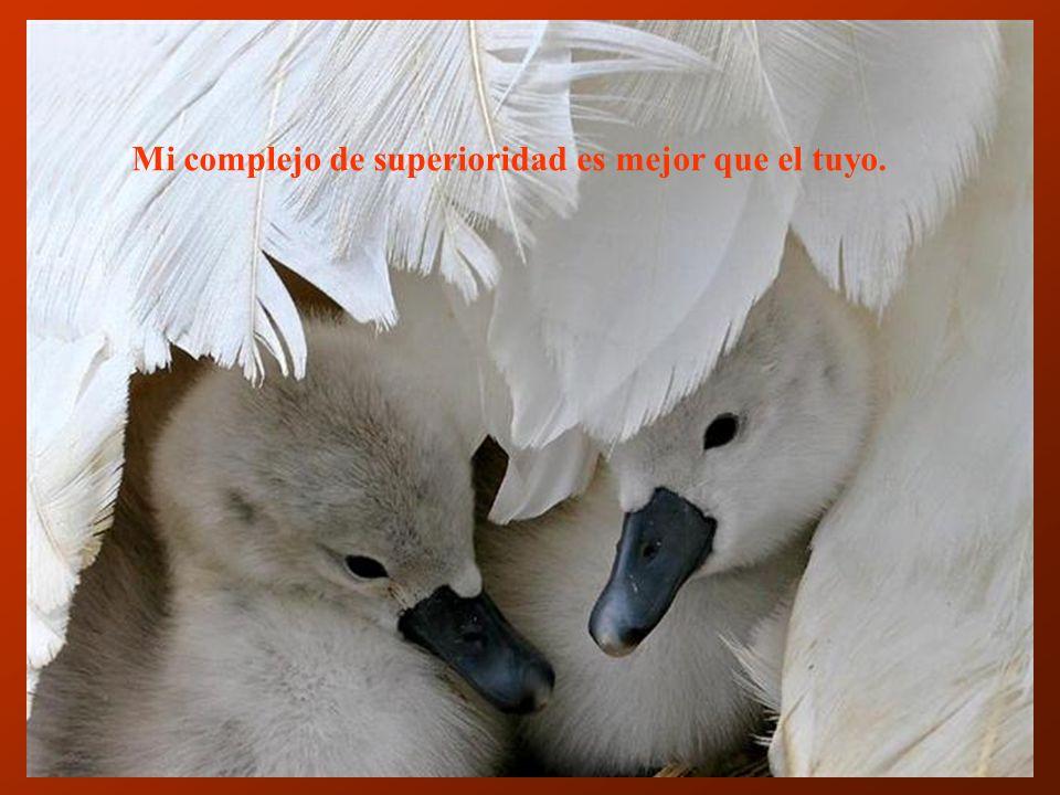 Mi complejo de superioridad es mejor que el tuyo.
