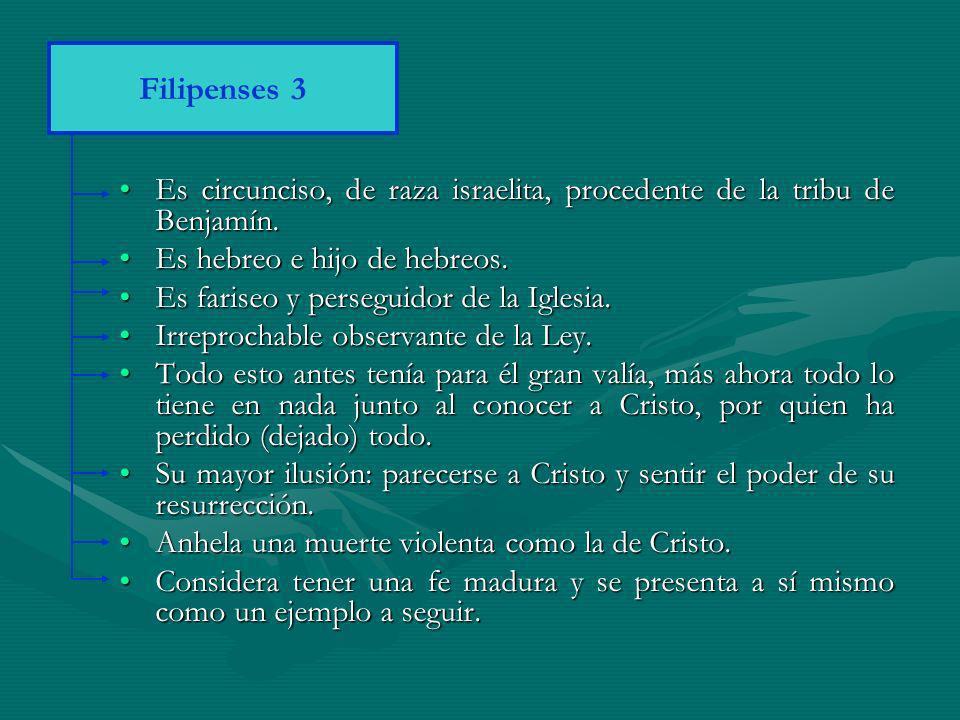 Filipenses 3 Es circunciso, de raza israelita, procedente de la tribu de Benjamín. Es hebreo e hijo de hebreos.