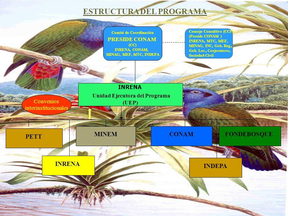 ESTRUCTURA DEL PROGRAMA Comité de Coordinación