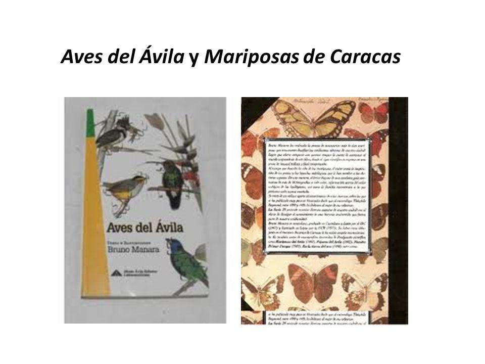 Aves del Ávila y Mariposas de Caracas