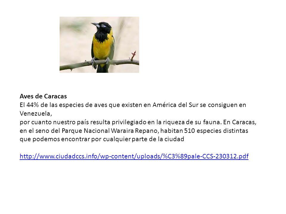 Aves de Caracas El 44% de las especies de aves que existen en América del Sur se consiguen en Venezuela,
