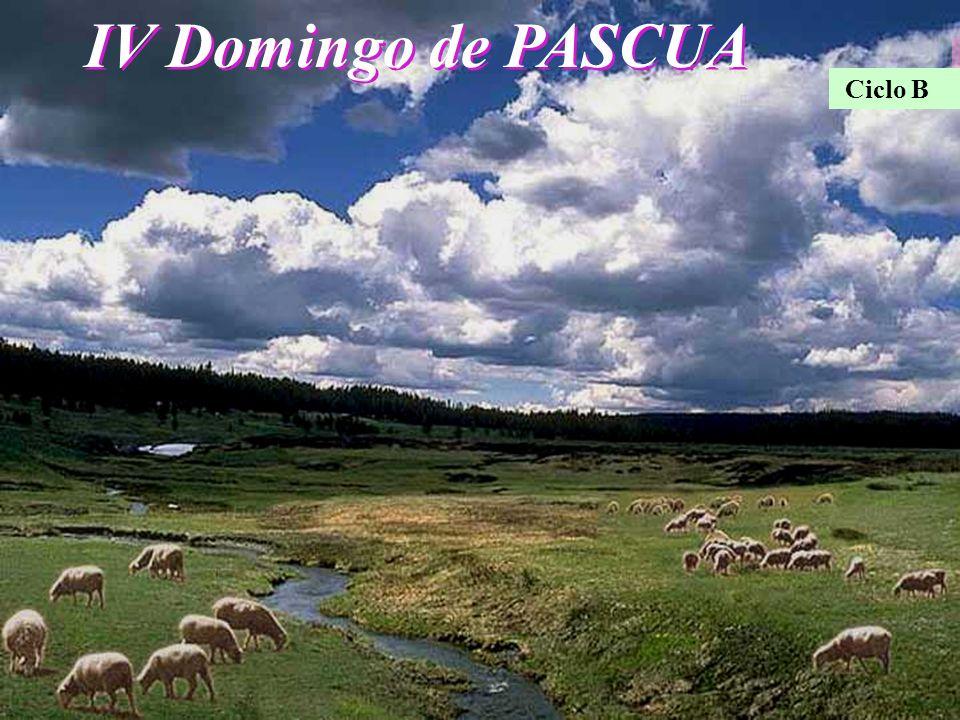 IV Domingo de PASCUA Ciclo B