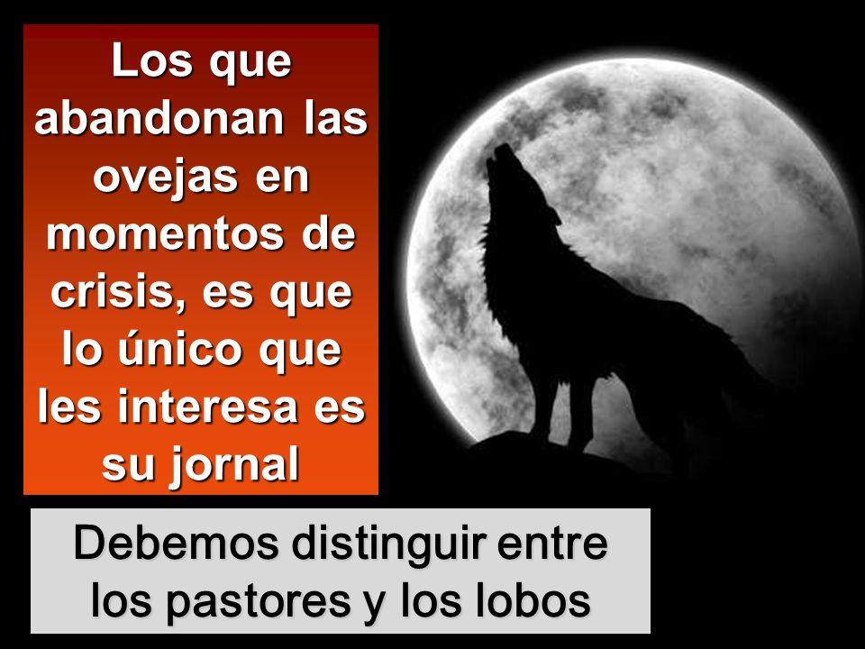 Debemos distinguir entre los pastores y los lobos